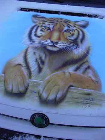 En snygg Tiger